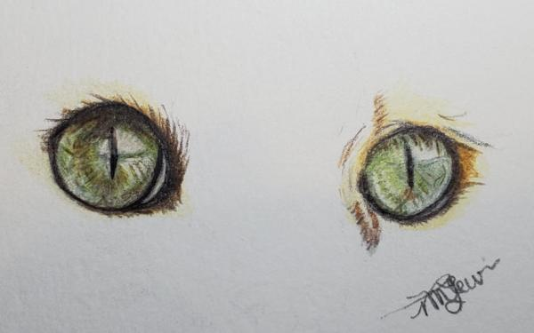 Cat Eyes In Colored Pencil 1 | Tracy Marie Lewis | www.stuffnthingz.com