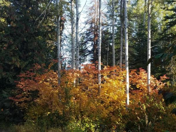 Fall Colors In Leavenworth | Tracy Marie Lewis | www.stuffnthingz.com