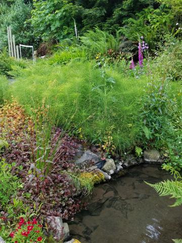 Klamath RV Park Pond | Tracy Marie Lewis | www.stuffnthingz.com