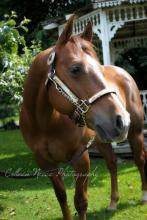 My old reining horse checks | Tracy Marie Lewis | www.stuffnthingz.com