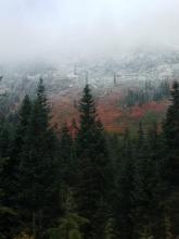 Stevens Pass Fall Colors With Snow | Tracy Marie Lewis | www.stuffnthingz.com