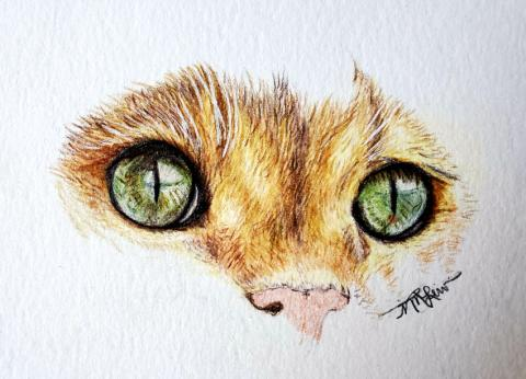Cat Face In Colored Pencil 1 | Tracy Marie Lewis | www.stuffnthingz.com