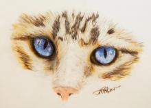 Blue Eyed Cat Face Colored Pencil Drawing | Tracy Marie Lewis | www.stuffnthingz.com