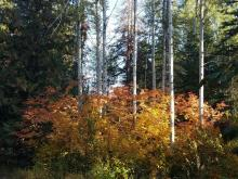 Fall Colors In Leavenworth   Tracy Marie Lewis   www.stuffnthingz.com