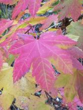 Beautiful Fall Colors At Leavenworth RV Campground   Tracy Marie Lewis   www.stuffnthingz.com